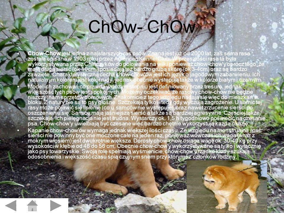 ChOw- ChOw