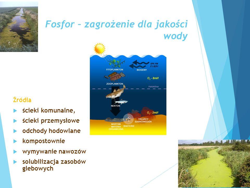 Fosfor – zagrożenie dla jakości wody