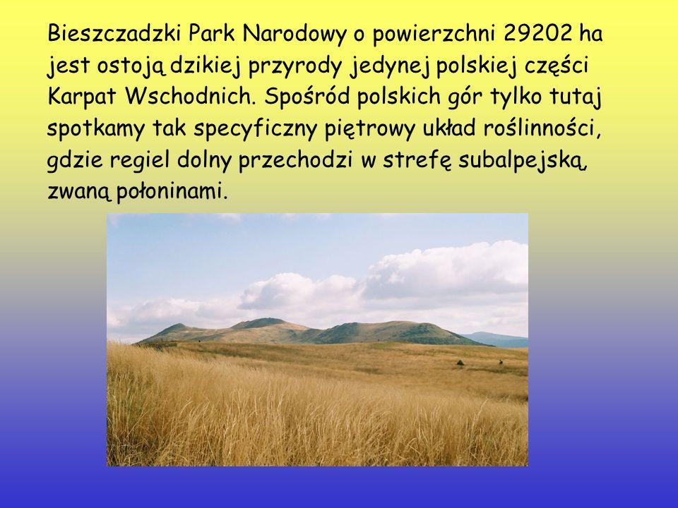 Bieszczadzki Park Narodowy o powierzchni 29202 ha jest ostoją dzikiej przyrody jedynej polskiej części Karpat Wschodnich.