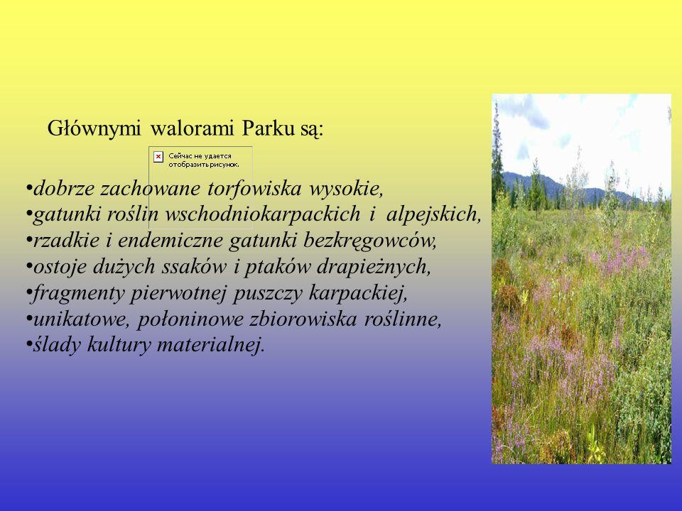 Głównymi walorami Parku są: