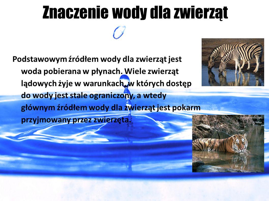Znaczenie wody dla zwierząt