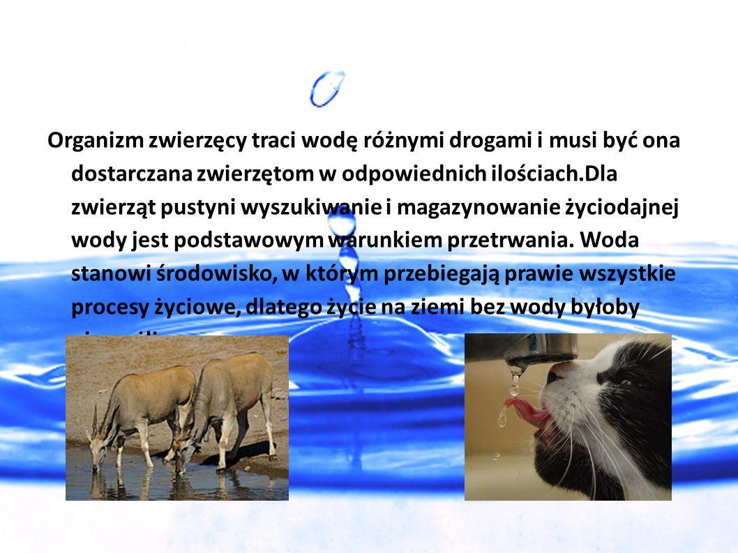 Organizm zwierzęcy traci wodę różnymi drogami i musi być ona dostarczana zwierzętom w odpowiednich ilościach.Dla zwierząt pustyni wyszukiwanie i magazynowanie życiodajnej wody jest podstawowym warunkiem przetrwania.