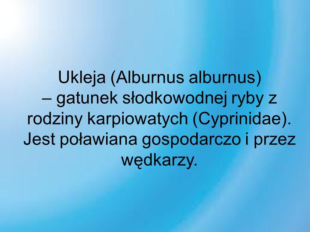 Ukleja (Alburnus alburnus) – gatunek słodkowodnej ryby z rodziny karpiowatych (Cyprinidae).