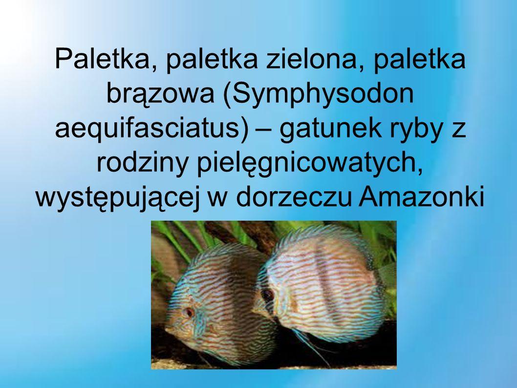 Paletka, paletka zielona, paletka brązowa (Symphysodon aequifasciatus) – gatunek ryby z rodziny pielęgnicowatych, występującej w dorzeczu Amazonki