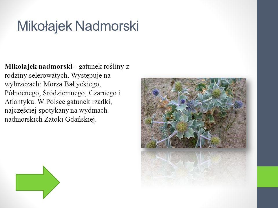 Mikołajek Nadmorski