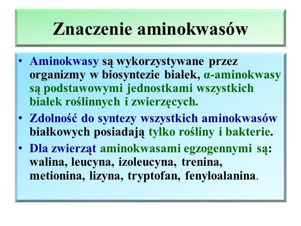 Znaczenie aminokwasów