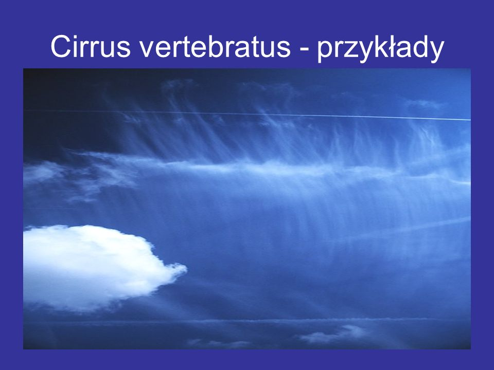 Cirrus vertebratus - przykłady