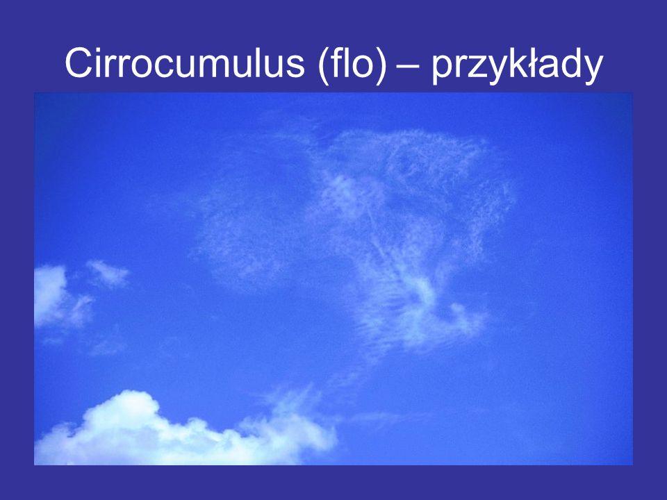 Cirrocumulus (flo) – przykłady