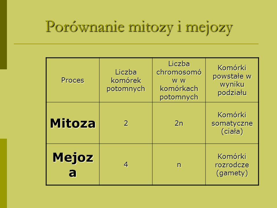 Porównanie mitozy i mejozy