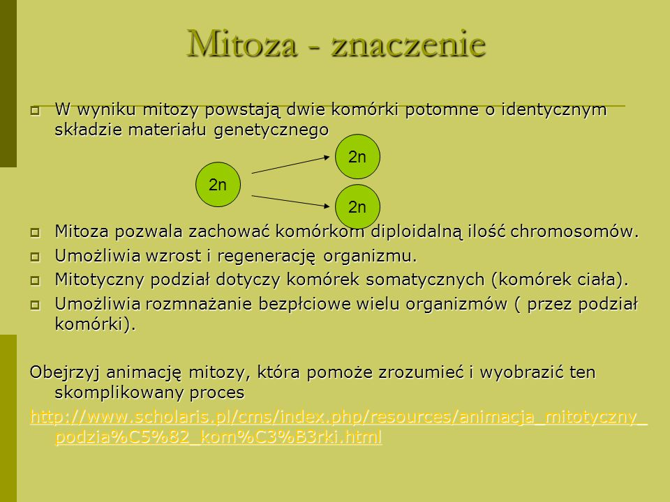 Mitoza - znaczenie W wyniku mitozy powstają dwie komórki potomne o identycznym składzie materiału genetycznego.