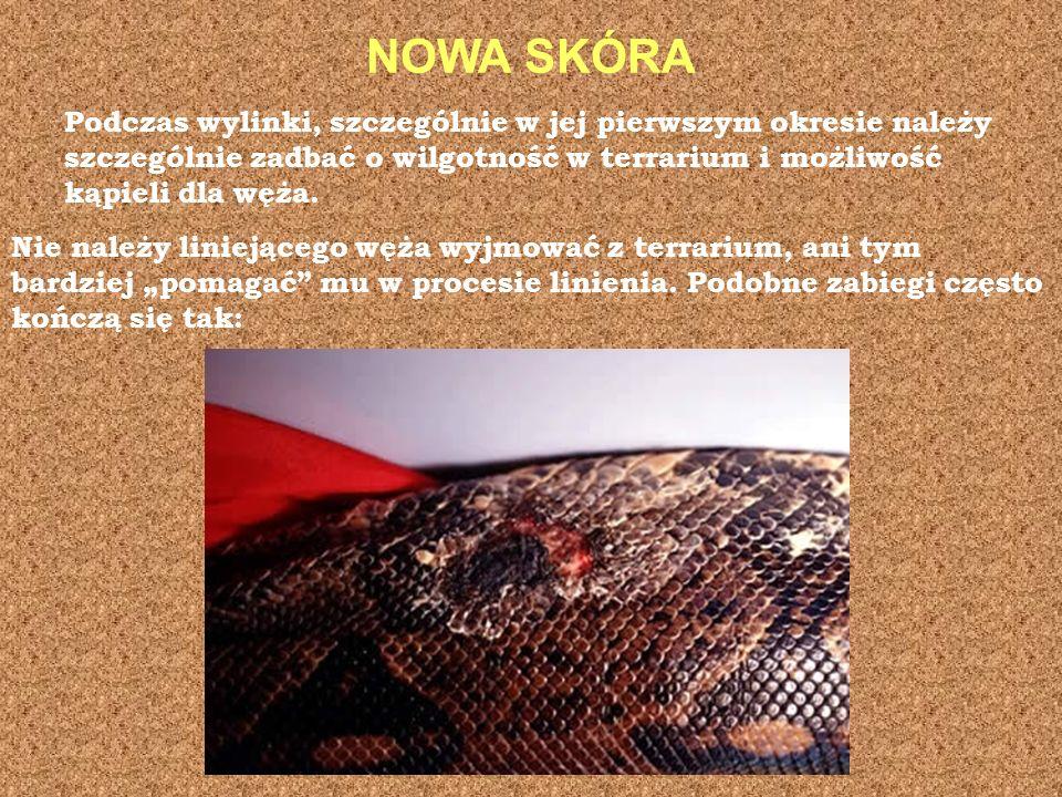 NOWA SKÓRA Podczas wylinki, szczególnie w jej pierwszym okresie należy szczególnie zadbać o wilgotność w terrarium i możliwość kąpieli dla węża.