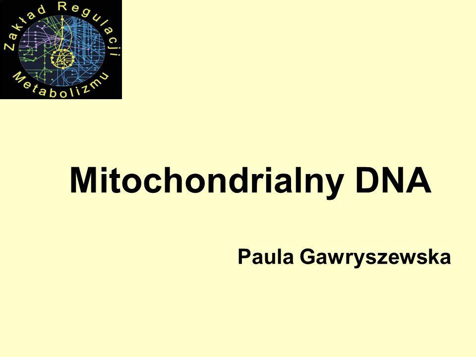 Mitochondrialny DNA Paula Gawryszewska