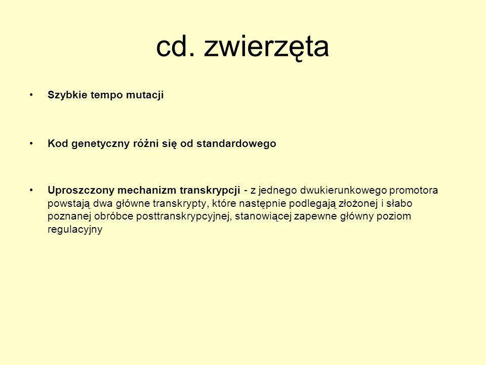 cd. zwierzęta Szybkie tempo mutacji
