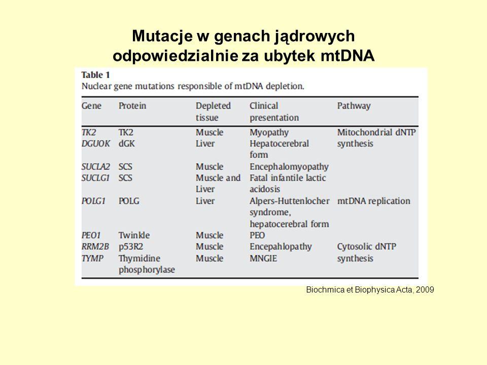 Mutacje w genach jądrowych odpowiedzialnie za ubytek mtDNA