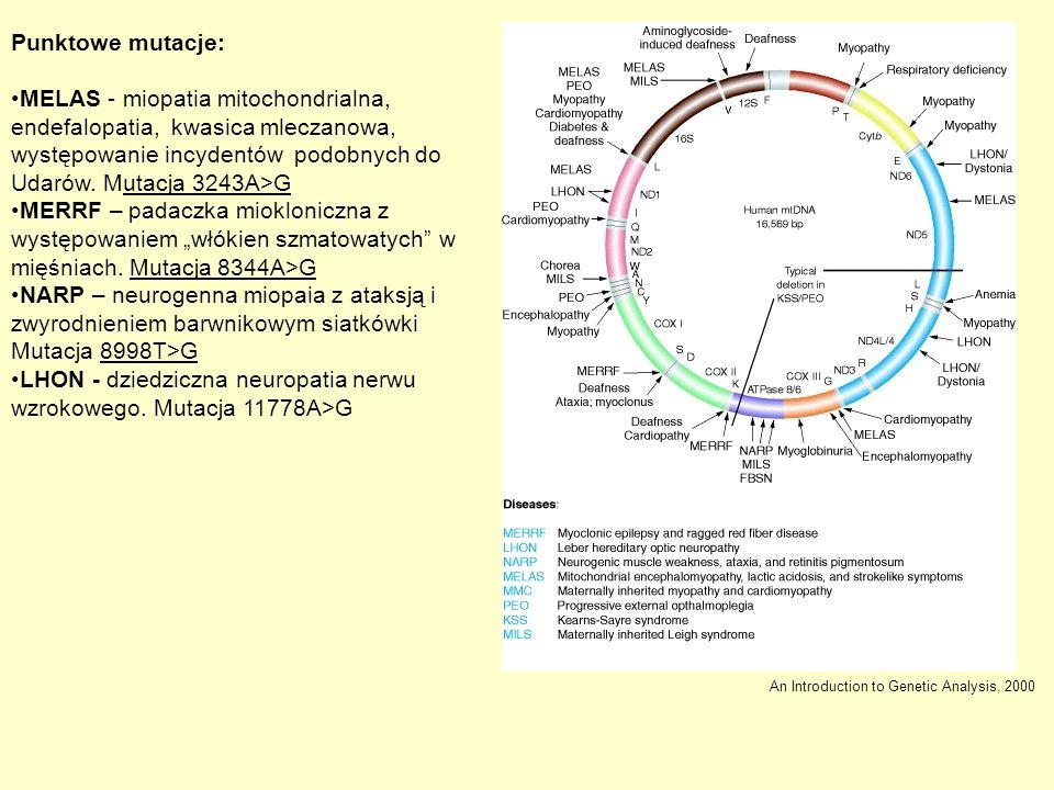 LHON - dziedziczna neuropatia nerwu wzrokowego. Mutacja 11778A>G