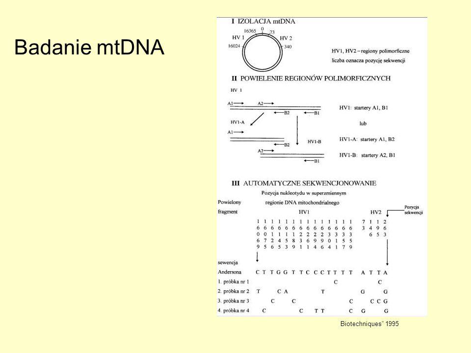 Badanie mtDNA Biotechniques 1995