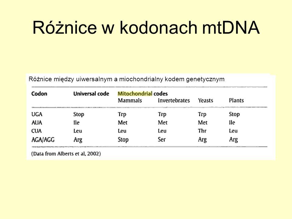 Różnice w kodonach mtDNA