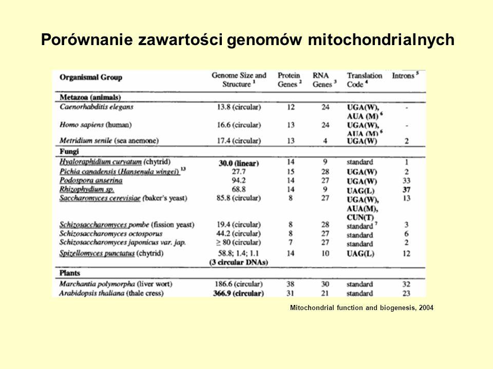 Porównanie zawartości genomów mitochondrialnych