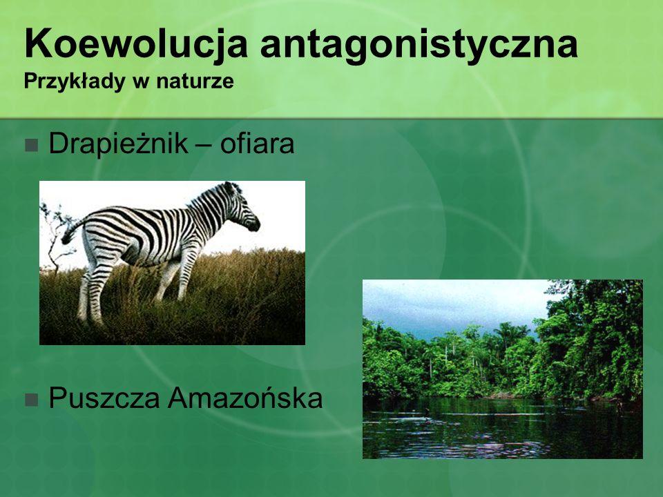 Koewolucja antagonistyczna Przykłady w naturze
