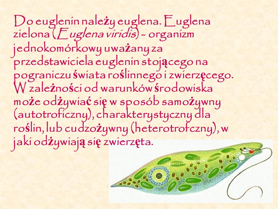 Do euglenin należy euglena