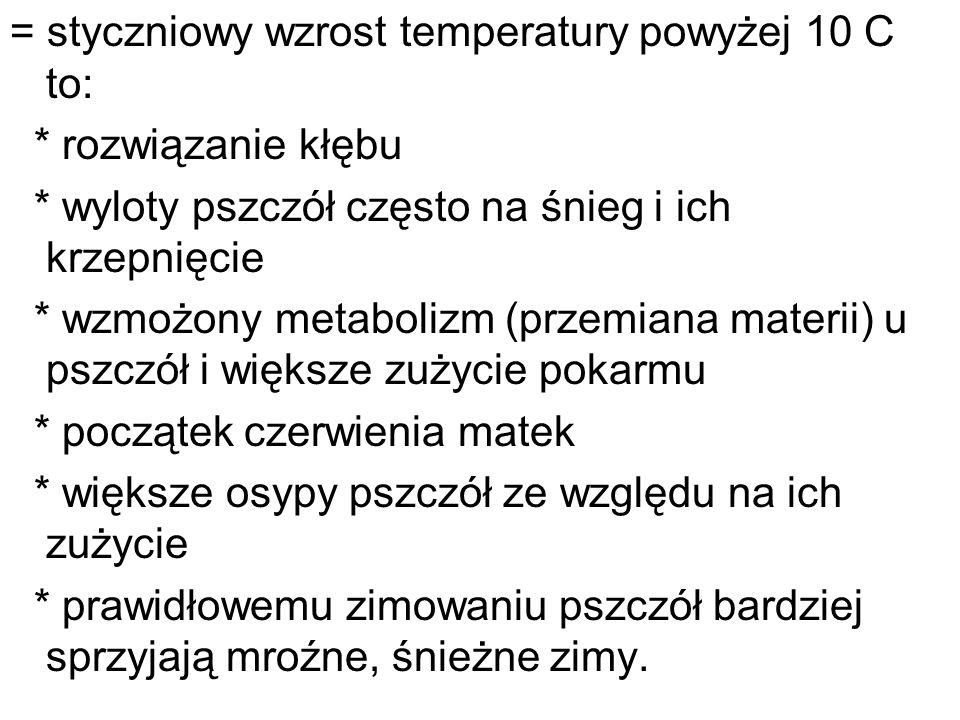 = styczniowy wzrost temperatury powyżej 10 C to: