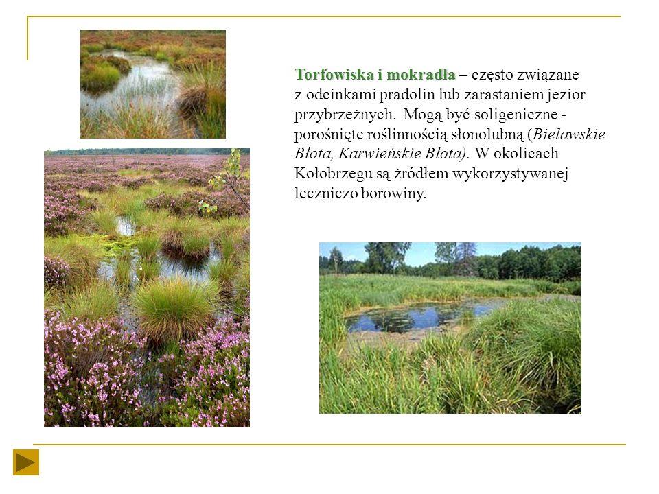 Torfowiska i mokradła – często związane z odcinkami pradolin lub zarastaniem jezior przybrzeżnych.