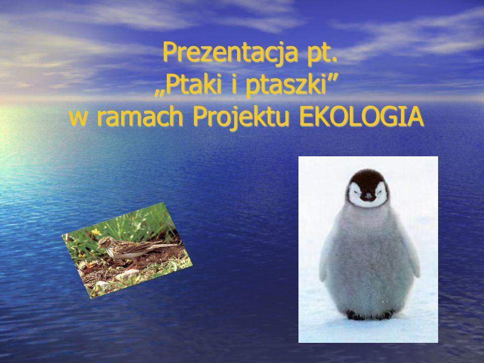 """Prezentacja pt. """"Ptaki i ptaszki w ramach Projektu EKOLOGIA"""