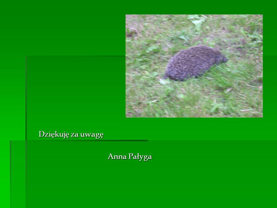 Dziękuję za uwagę Anna Pałyga
