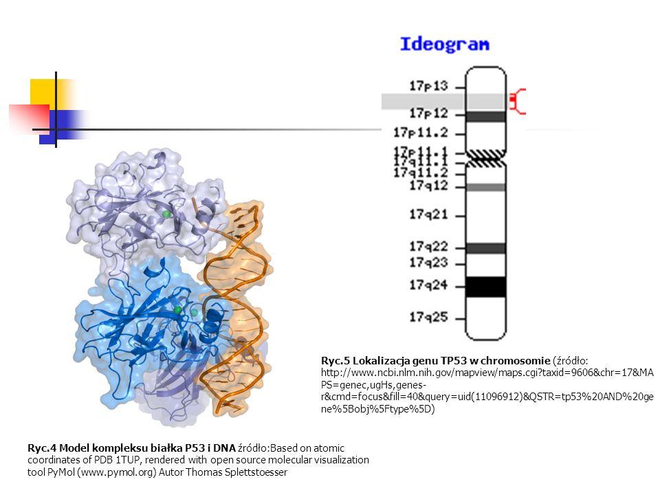 Ryc. 5 Lokalizacja genu TP53 w chromosomie (źródło: http://www. ncbi