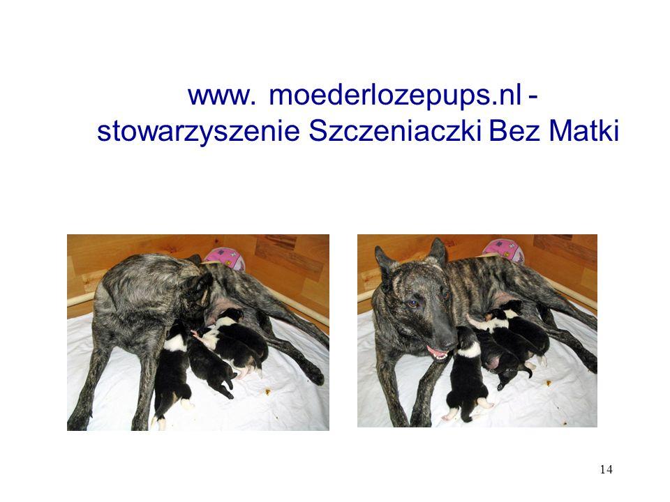 www. moederlozepups.nl - stowarzyszenie Szczeniaczki Bez Matki
