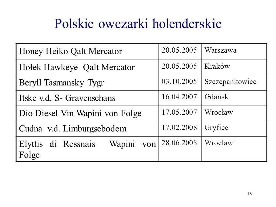 Polskie owczarki holenderskie