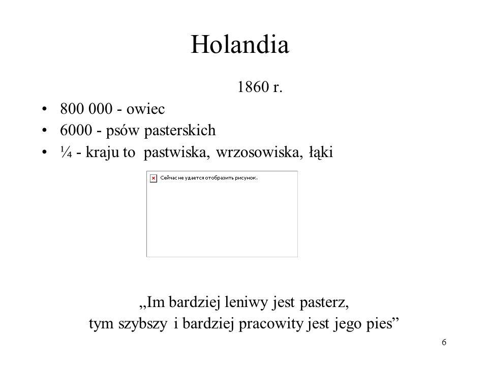 Holandia 1860 r. 800 000 - owiec 6000 - psów pasterskich