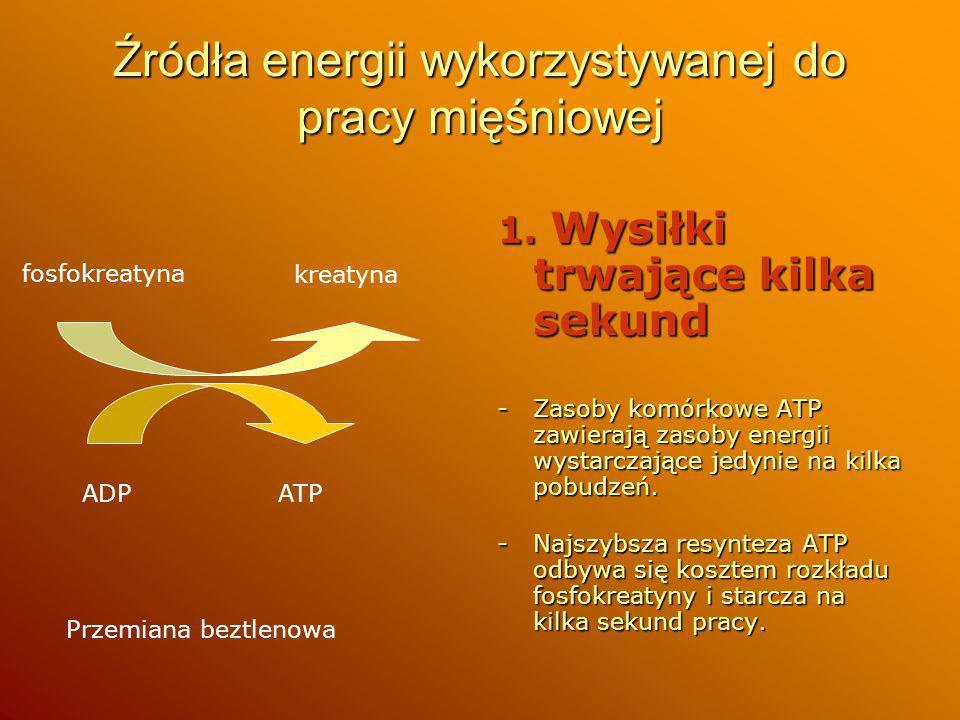 Źródła energii wykorzystywanej do pracy mięśniowej