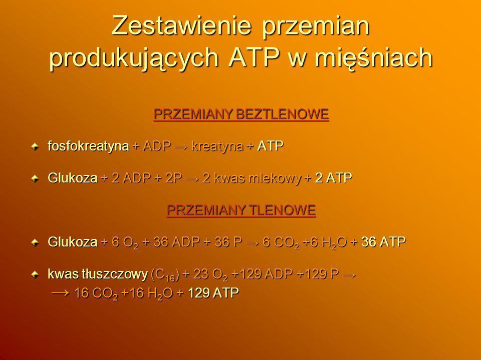 Zestawienie przemian produkujących ATP w mięśniach