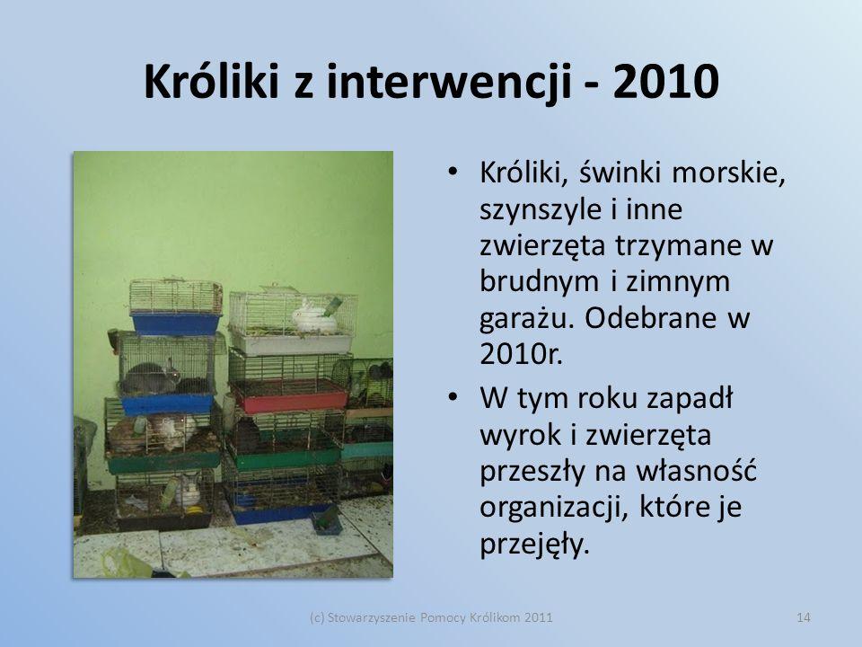 Króliki z interwencji - 2010