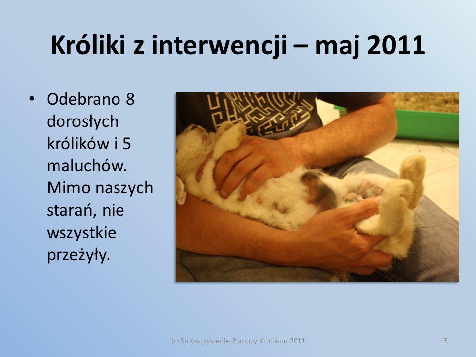 Króliki z interwencji – maj 2011