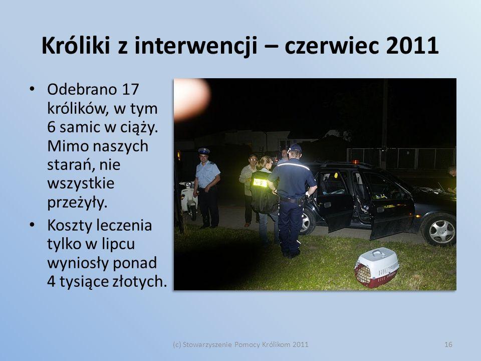 Króliki z interwencji – czerwiec 2011