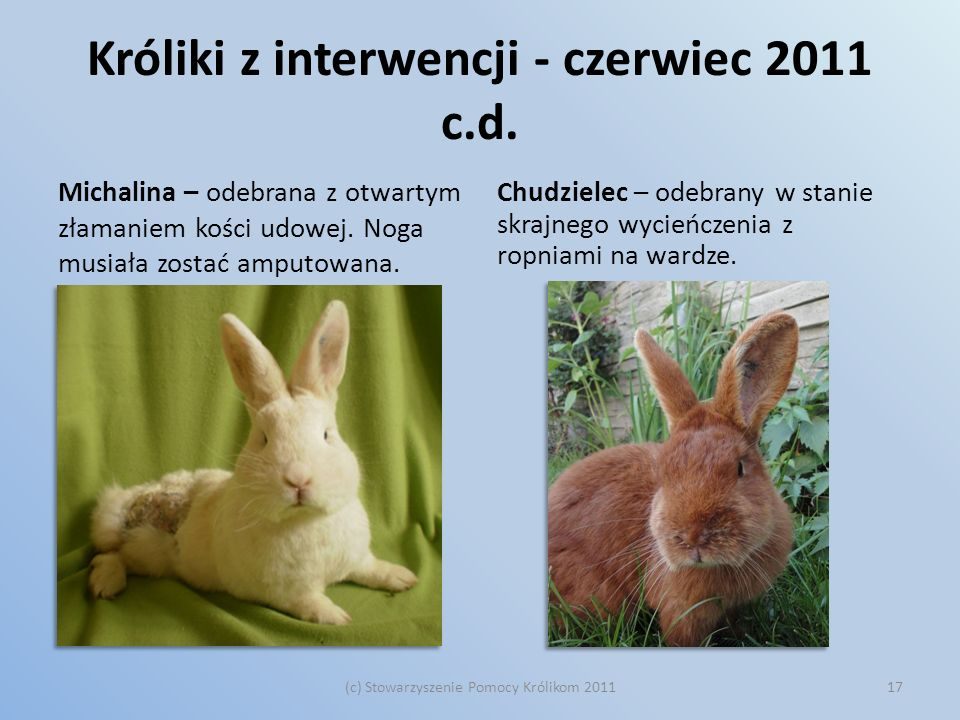 Króliki z interwencji - czerwiec 2011 c.d.