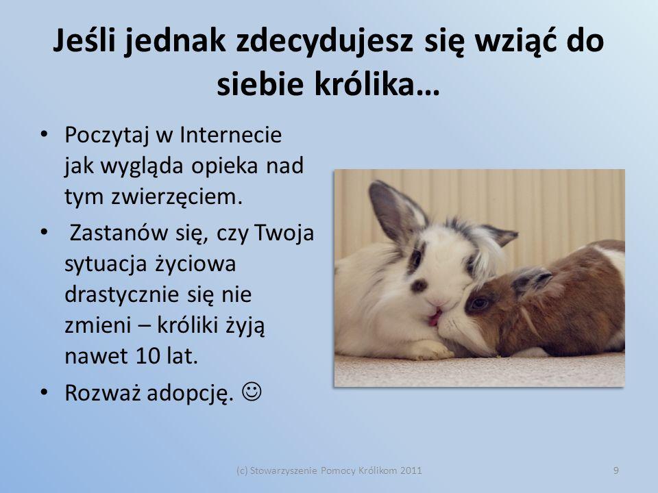 Jeśli jednak zdecydujesz się wziąć do siebie królika…