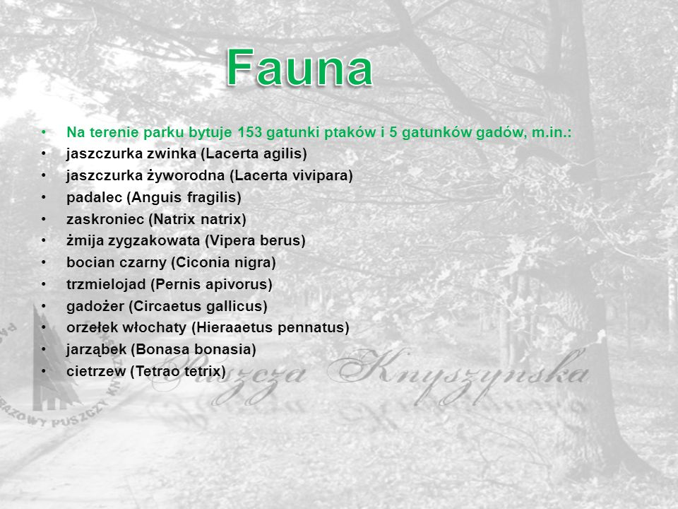 Fauna Na terenie parku bytuje 153 gatunki ptaków i 5 gatunków gadów, m.in.: jaszczurka zwinka (Lacerta agilis)