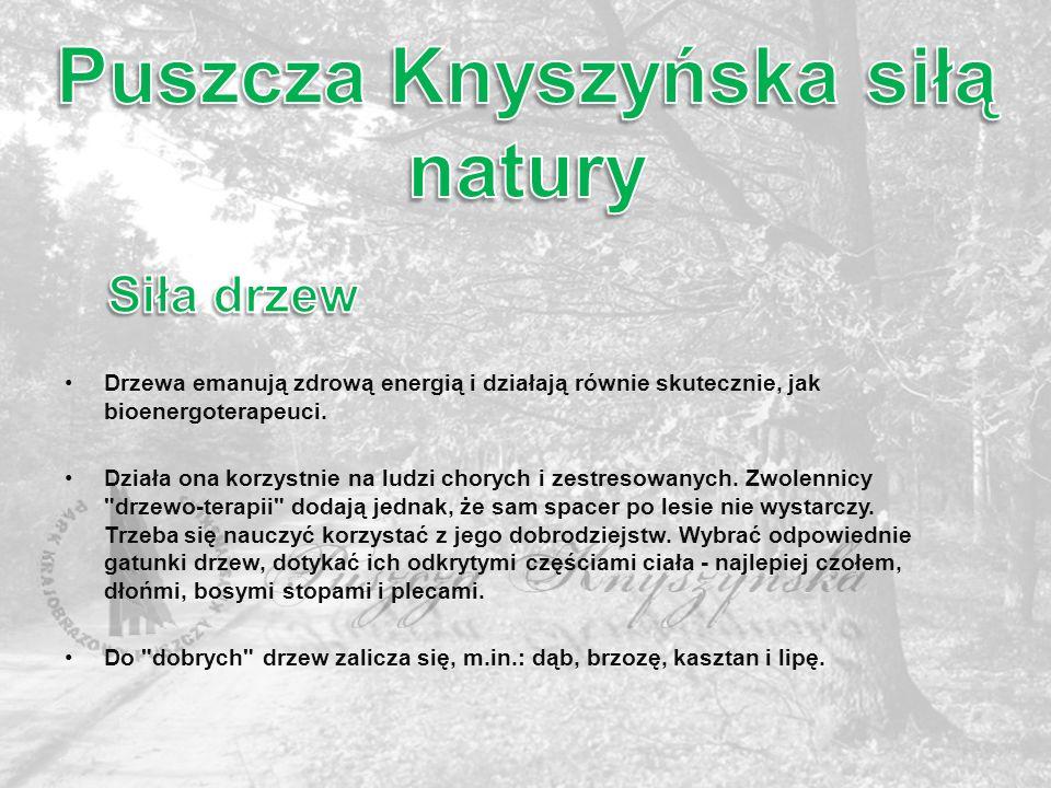 Puszcza Knyszyńska siłą natury