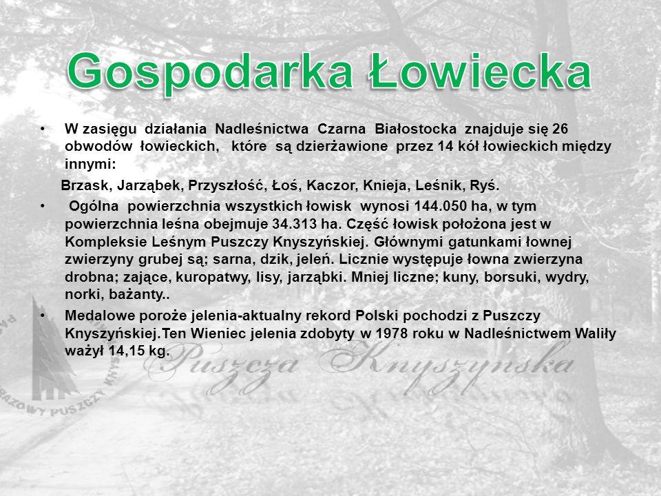 Gospodarka Łowiecka