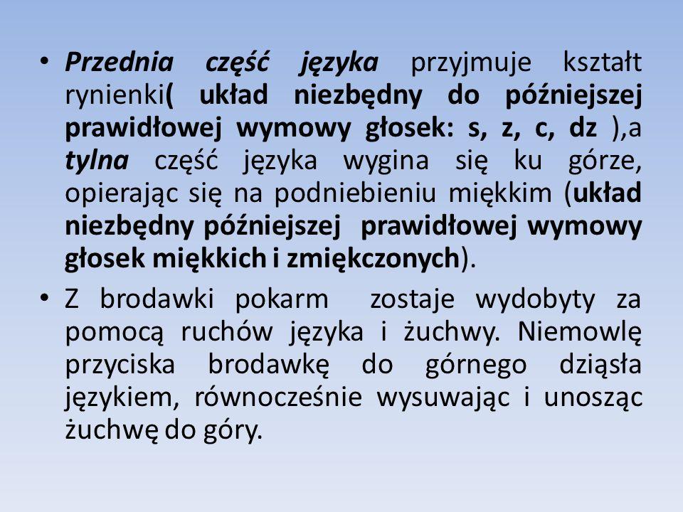 Przednia część języka przyjmuje kształt rynienki( układ niezbędny do późniejszej prawidłowej wymowy głosek: s, z, c, dz ),a tylna część języka wygina się ku górze, opierając się na podniebieniu miękkim (układ niezbędny późniejszej prawidłowej wymowy głosek miękkich i zmiękczonych).