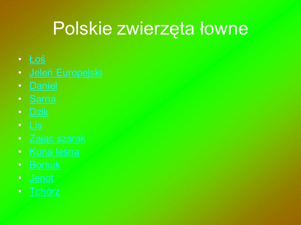 Polskie zwierzęta łowne
