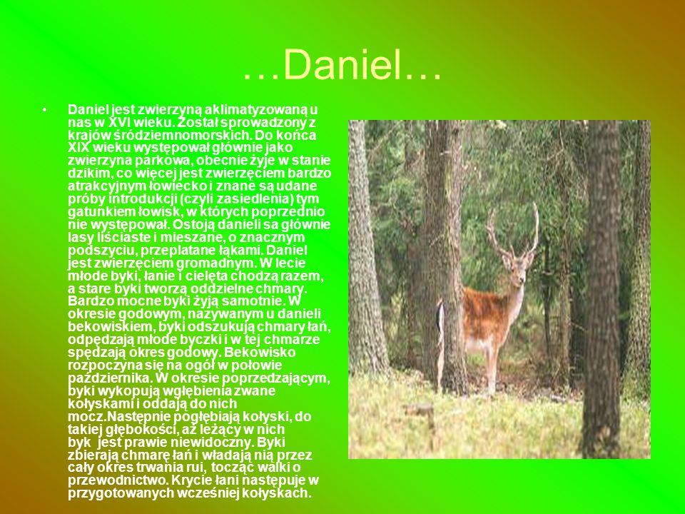 …Daniel…