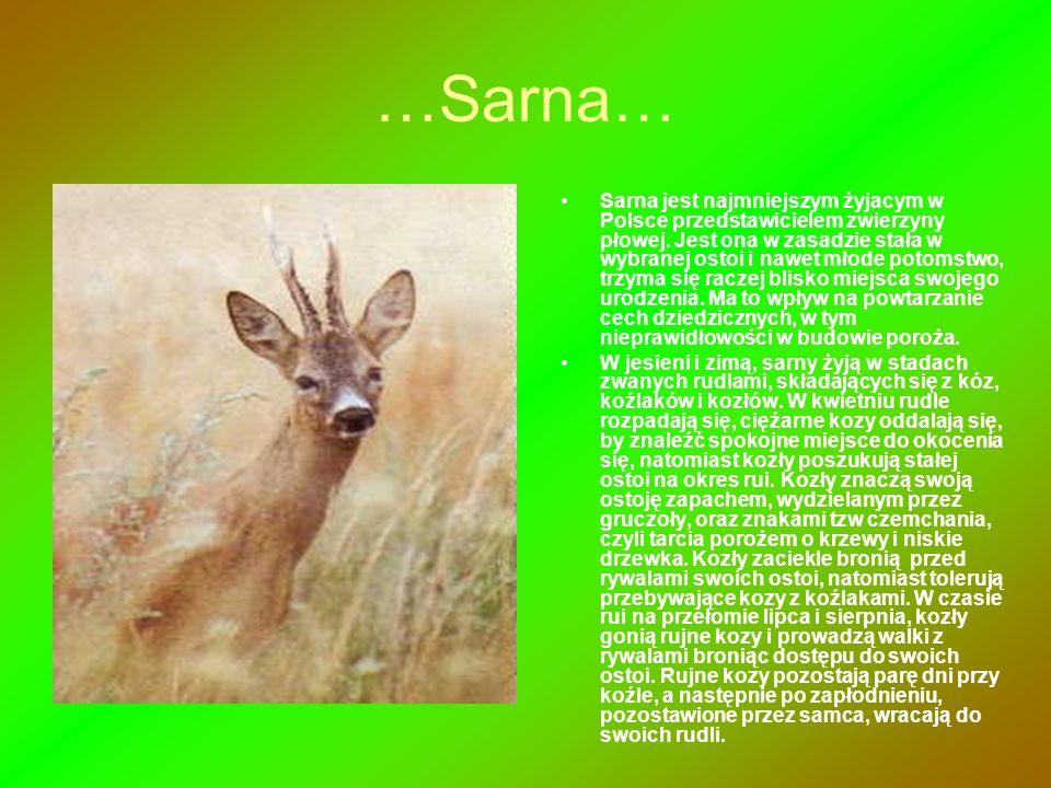 …Sarna…
