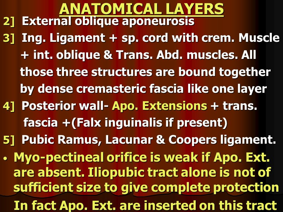 ANATOMICAL LAYERS 2] External oblique aponeurosis. 3] Ing. Ligament + sp. cord with crem. Muscle.