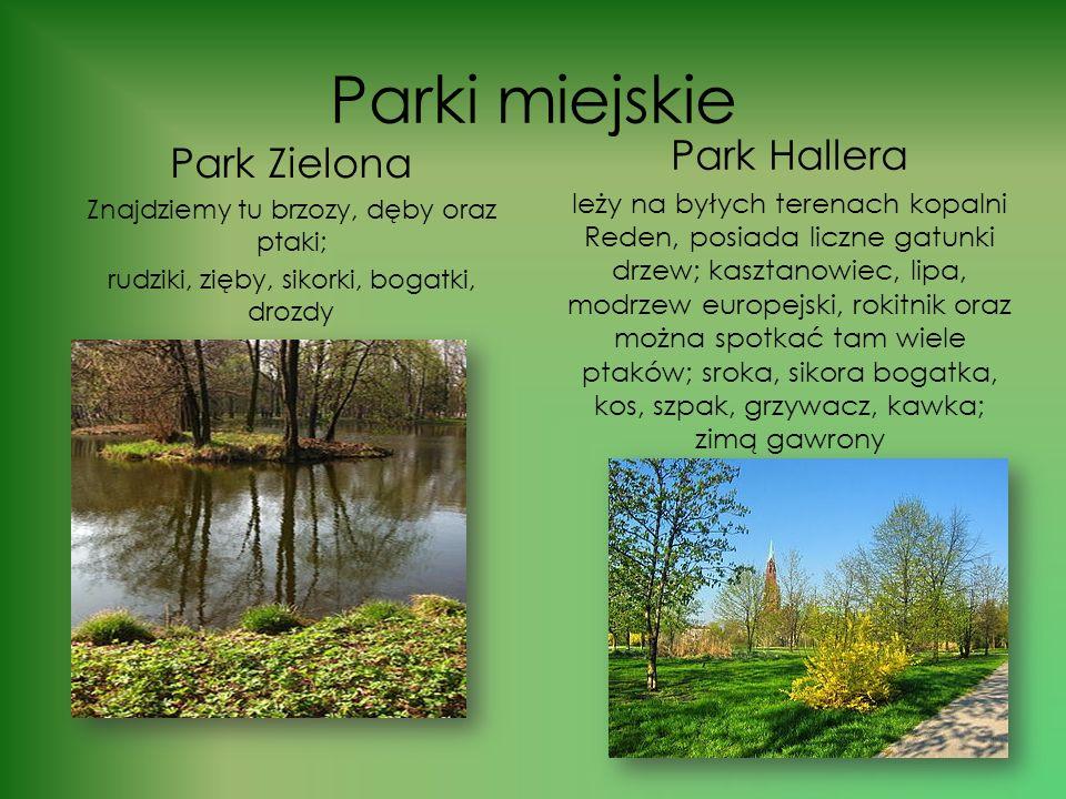 Parki miejskie Park Hallera Park Zielona
