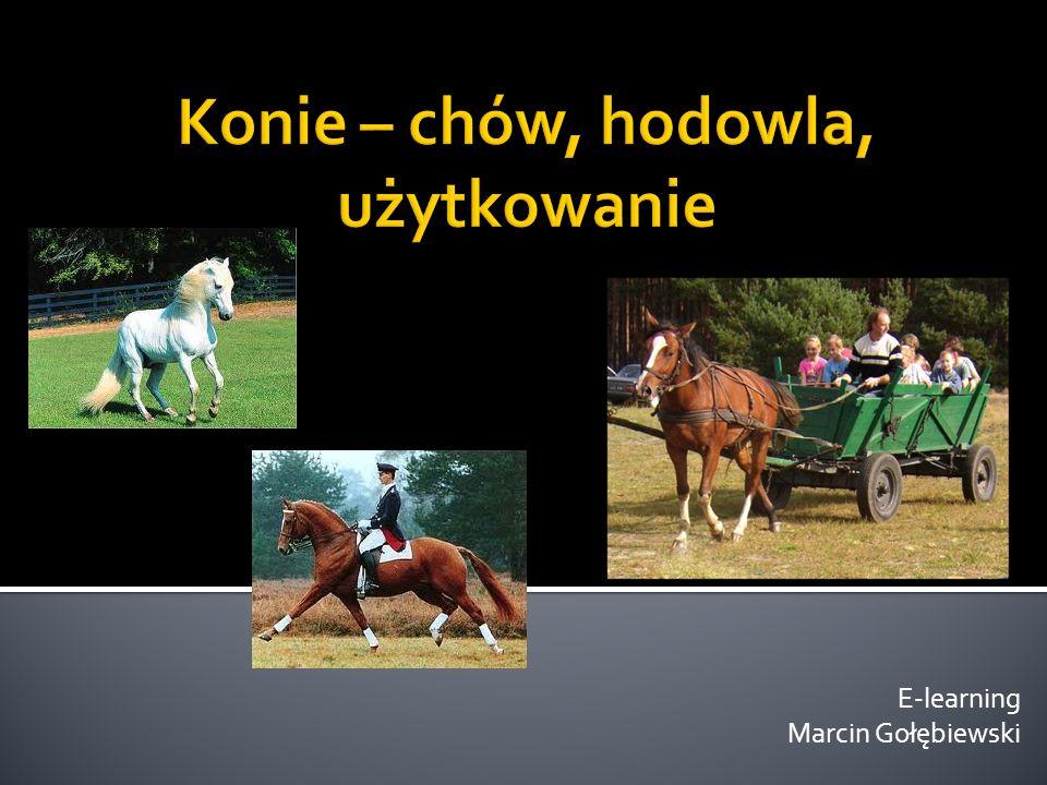 Konie – chów, hodowla, użytkowanie