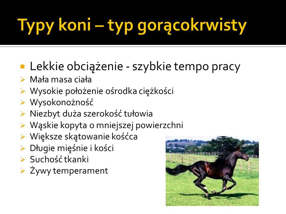 Typy koni – typ gorącokrwisty